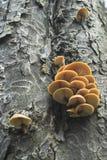 Funghi dell'albero Fotografie Stock