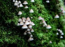 Funghi della foresta pluviale Fotografia Stock Libera da Diritti