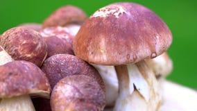 Funghi della foresta Porcini Prodotto naturale Rotazione 4K della squisitezza archivi video