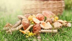 Funghi della foresta su erba verde Immagini Stock
