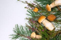 Funghi della foresta su un fondo bianco Fotografia Stock