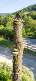 Funghi della montagna su un albero in Serbia Immagine Stock