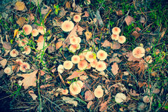 Funghi di avvelenamento fotografia stock libera da diritti