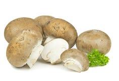 Funghi di Brown Fotografia Stock