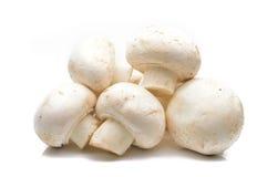 Funghi di campo freschi su una priorità bassa bianca Immagini Stock