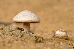 Funghi di cavallo Fotografia Stock Libera da Diritti