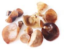 Funghi di legno dell'orecchio Immagini Stock Libere da Diritti