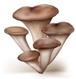 Funghi di ostrica royalty illustrazione gratis