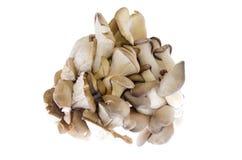 Funghi di ostrica commestibili su fondo bianco Fotografie Stock