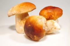 Funghi di Porcino Immagini Stock Libere da Diritti