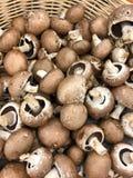 Funghi di recente selezionati Immagine Stock Libera da Diritti