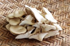 Funghi di Sajor-caju Immagini Stock