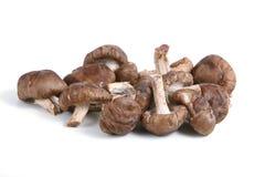 Funghi di Shiitake Immagini Stock