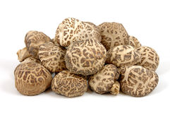 Funghi di Shiitake Fotografie Stock