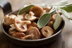 Funghi di shiitake Fotografia Stock Libera da Diritti