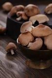 Funghi di shiitake Immagine Stock
