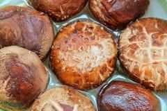 Funghi di shiitake freschi o funghi di lentinula edodes Immagine Stock