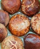 Funghi di shiitake freschi o funghi di lentinula edodes Immagini Stock Libere da Diritti