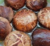 Funghi di shiitake freschi o funghi di lentinula edodes Fotografia Stock Libera da Diritti