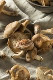 Funghi di shiitake freschi organici sani Fotografia Stock