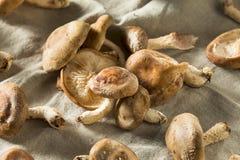 Funghi di shiitake freschi organici sani Fotografie Stock