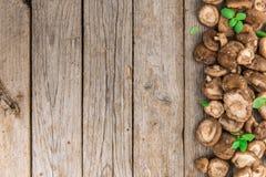 Funghi di shiitake, fuoco selettivo Immagini Stock Libere da Diritti