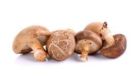 Funghi di shiitake isolati sui precedenti bianchi Fotografia Stock