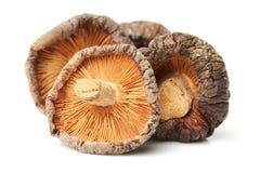 Funghi di shiitake secchi Immagine Stock
