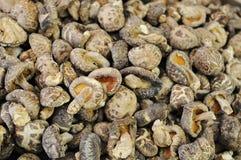 Funghi di shiitake secchi Fotografia Stock