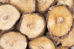 Funghi di shiitake secchi Immagine Stock Libera da Diritti