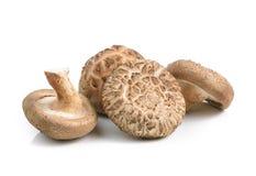 Funghi di shiitake su fondo bianco Immagini Stock Libere da Diritti