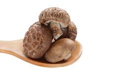 Funghi di shiitake sul cucchiaio di legno isolato Immagine Stock Libera da Diritti