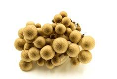 Funghi di Shimeji su fondo bianco Fotografia Stock Libera da Diritti