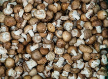 Funghi di Shitake Immagini Stock