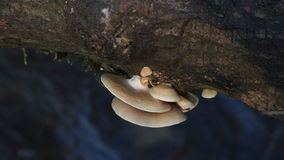 Funghi di sostegno Fotografia Stock