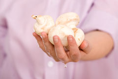 Funghi di tasto in mano femminile Fotografia Stock