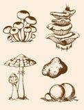 Funghi disegnati a mano d'annata della foresta Fotografia Stock