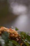 Funghi, distretto del lago Fotografie Stock Libere da Diritti