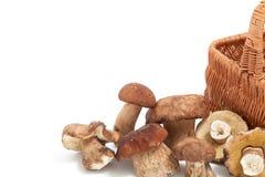 Funghi e frammento crudi del canestro di vimini Fotografie Stock