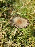 Funghi e fungo Fotografia Stock Libera da Diritti