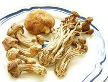 Funghi esotici, secchi fotografia stock
