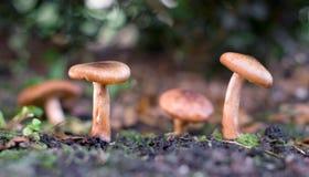 Funghi in foresta immagine stock libera da diritti