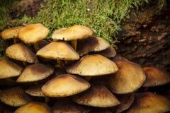 Funghi in foresta Fotografia Stock