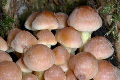 Funghi in foresta Fotografia Stock Libera da Diritti
