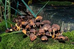 Funghi in foresta vicino al tronco di albero fotografie stock