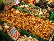 Funghi freschi Fotografia Stock Libera da Diritti