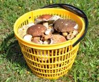 Funghi freschi Fotografie Stock