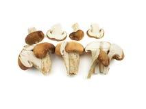 Funghi freschi del fungo prataiolo Fotografie Stock Libere da Diritti