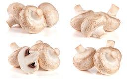 Funghi freschi del fungo prataiolo isolati su fondo bianco Insieme o raccolta Fotografia Stock Libera da Diritti