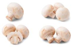 Funghi freschi del fungo prataiolo isolati su fondo bianco Insieme o raccolta Immagini Stock Libere da Diritti